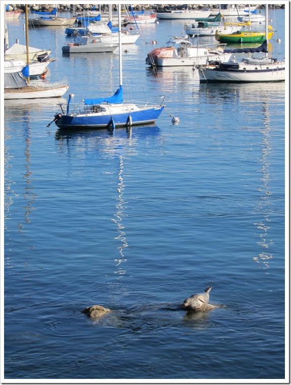 Monterey December 2011 (20)